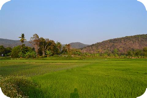 QiGong in Thailand
