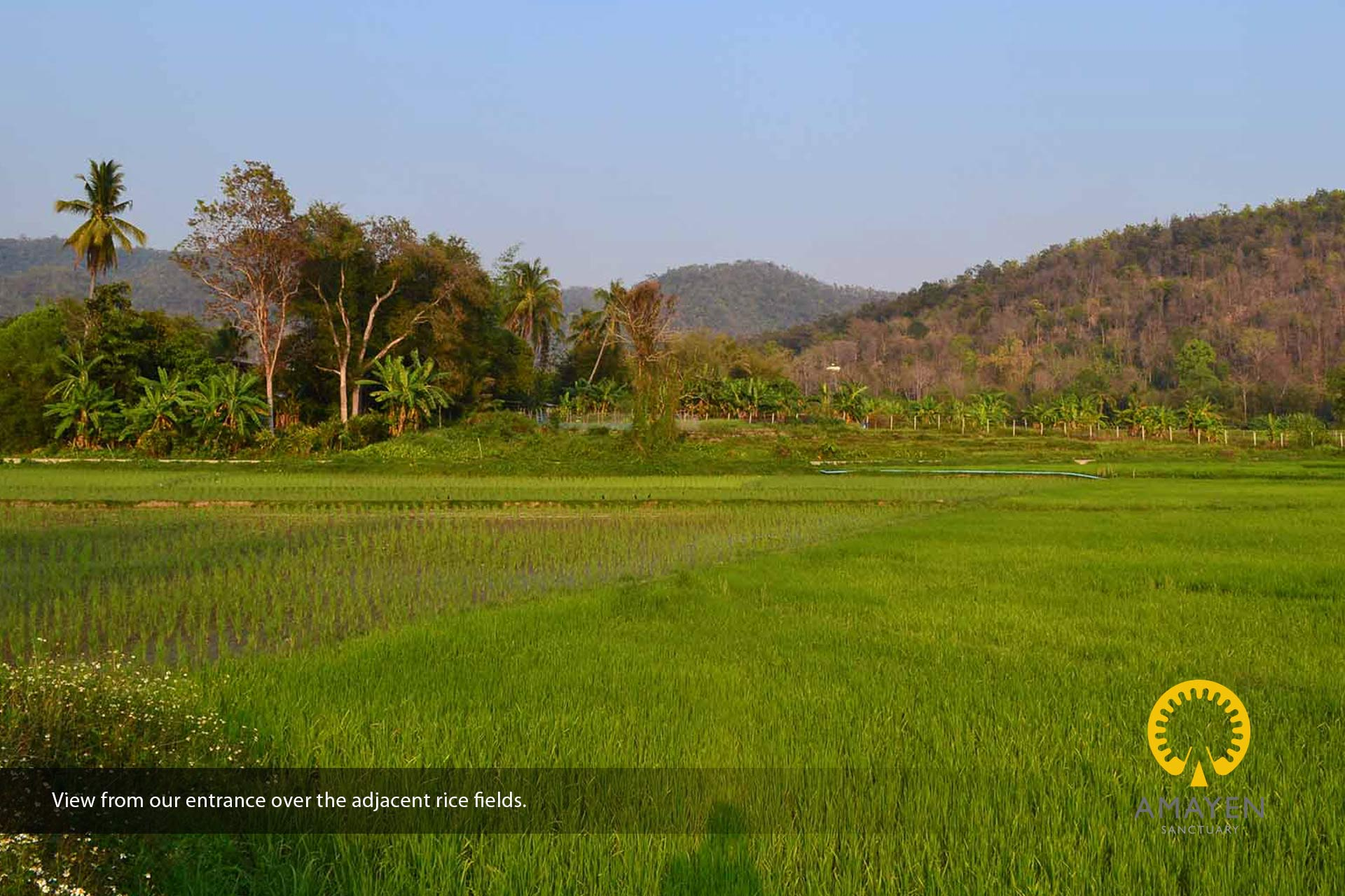 rice-fields-yoga-meditation-retreat-chiang-mai-thailand-2019